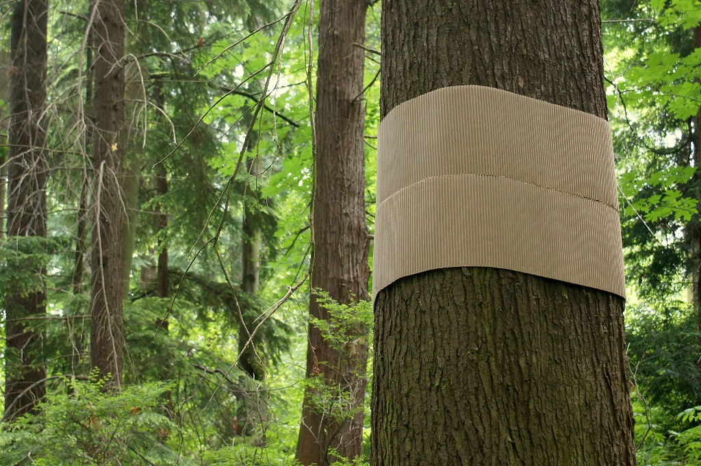 Corrugated cardboart installation, part of Tree Futures